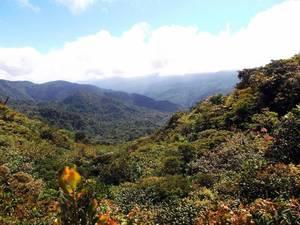 Montagne del Costa Rica con legno
