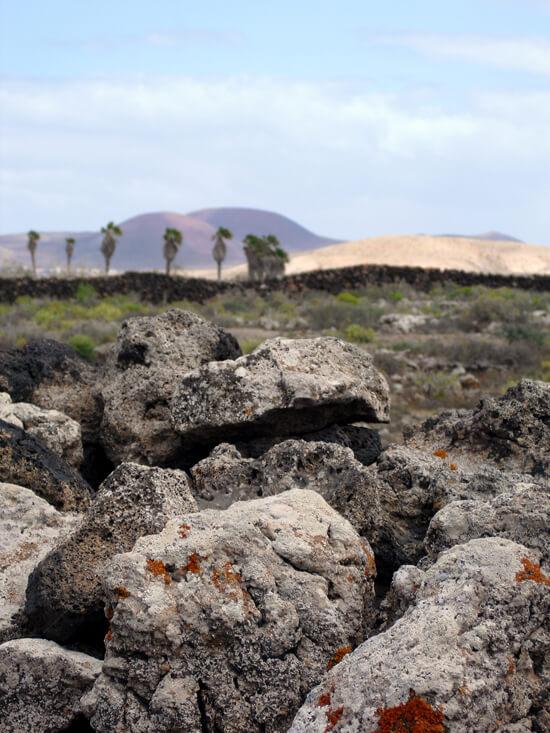 Roches avec des palmiers sur Fuerteventura