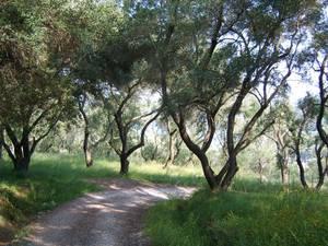 Bäume auf Korfu