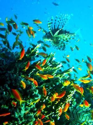 Récif de poissons de Malte