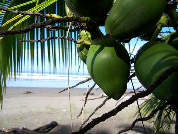 Coco internship in costa rica