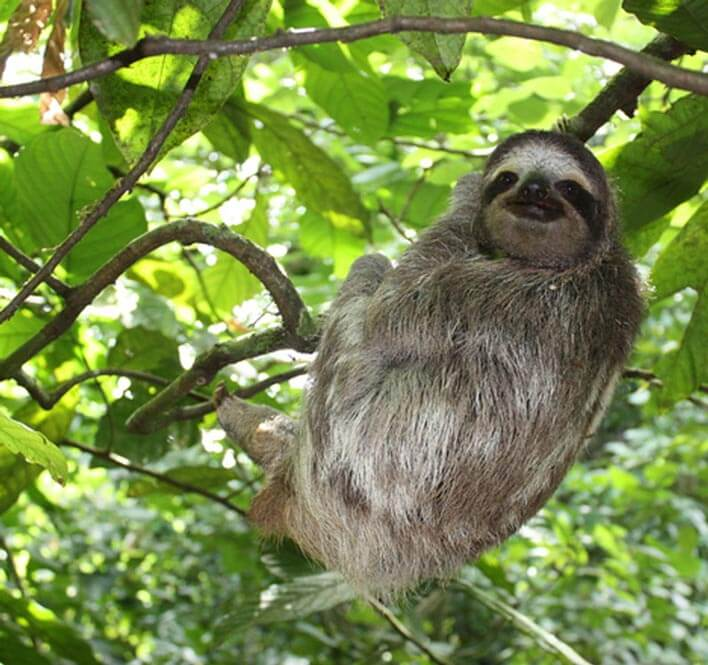 sloth-in-costa-rica_internships